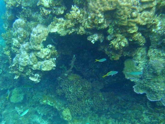 Blue Cove Island Resort: Beautiful coral and fish just a few yards off the beach