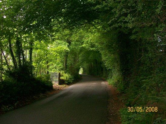 """Millstreet, Irlande : La exuberante vegetación forma verdaderos """"túneles"""" en los caminos en el Condado de Cork"""