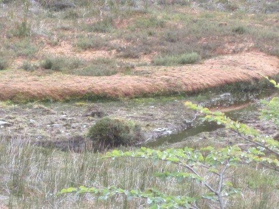Parque Nacional Tierra del Fuego: Close up of the peat bog