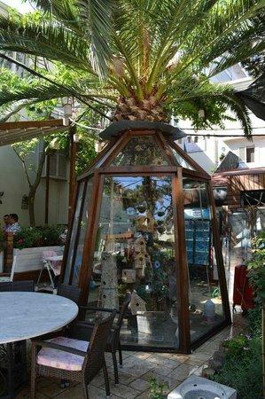 Tavaci Recep Usta: The atrium filled with canaries