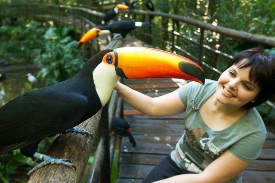 Parque das Aves: Viveiro de imersão 'Pantanal' / 'Pantanal' walkthrough aviary