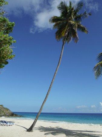 Renaissance St. Croix Carambola Beach Resort & Spa: Picture perfect postcard