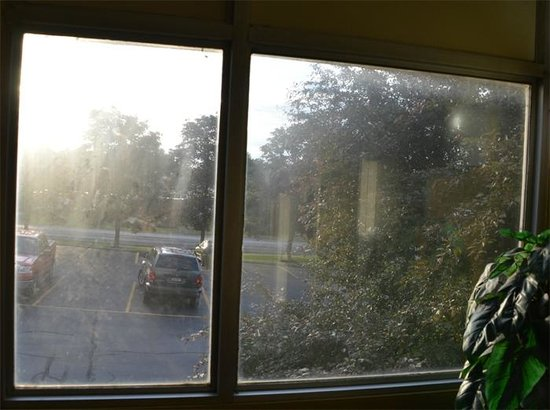 Clarion Inn & Suites - Fairgrounds: A window wash should come quickly rather than later.
