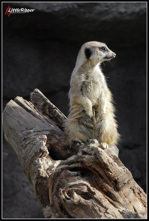 Auckland Zoo: Love this one 8)