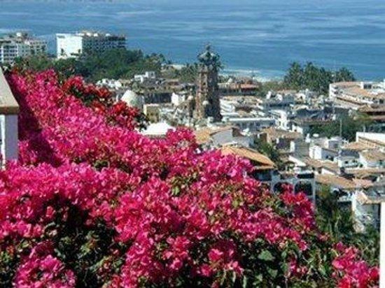 Hotel Suites la Siesta: Rooftopflowerscityandoceanview