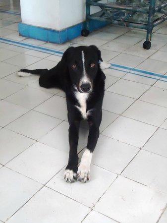 Casa de la Chicheria : May, resident hostel dog