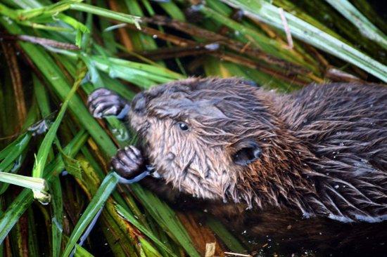Francis Point B&B: Beaver Tales Getaway Package