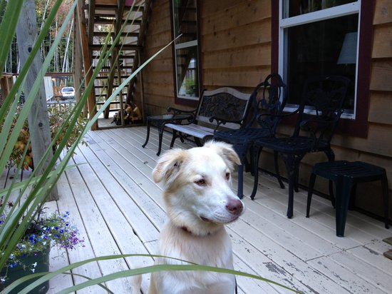Francis Point B&B: 'Very Important Pooch' Welcome