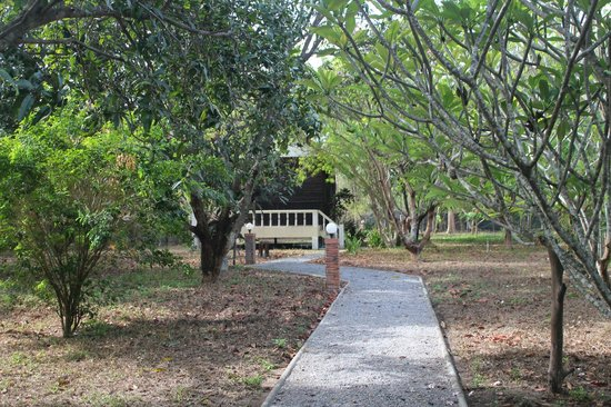 Thai Bamboo Guesthouse: Path to our bungalow