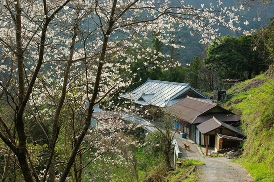大豊町, 高知県, There are some cherry blossom in spring