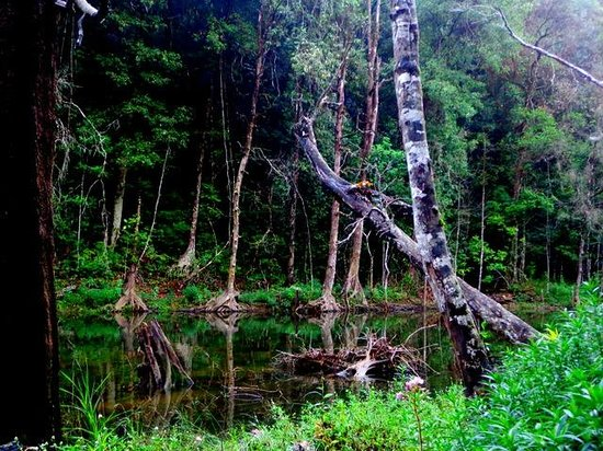 Bhadra Nature Camp Reviews