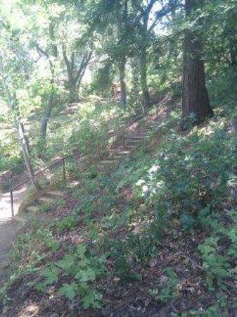 Hakone Gardens: Garden View