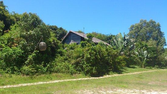 Mango Bay Resort: Room amid greens