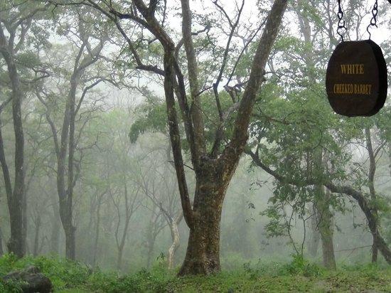 K Gudi Wilderness Camp: Rain at the Camp