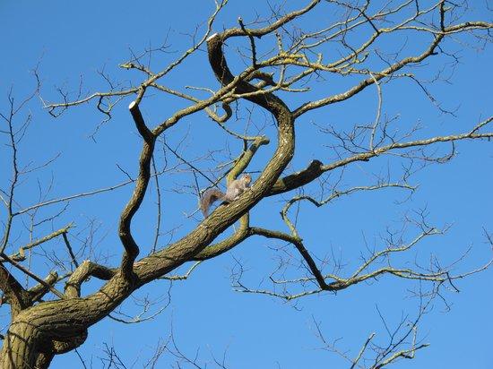 هوكويل هاوس هوتل: Squirrel out the window
