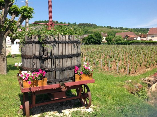 Le Richebourg : Chambolle Musigny vineyards