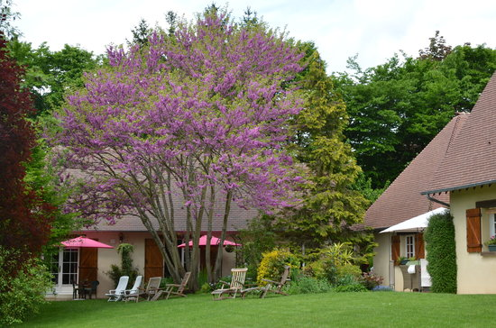 Le Clos Fleuri: Vue jardin