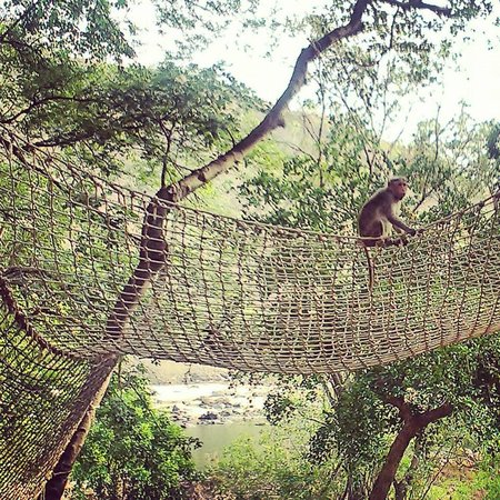 Galibore Nature Camp : play area for folks of all kinds