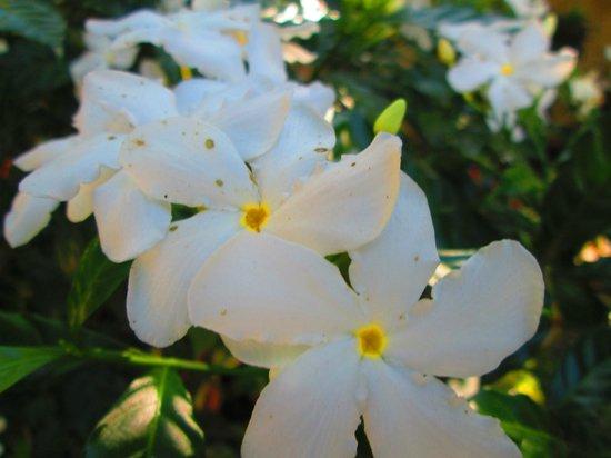 Residencia de Salvacion: Garden Flowers
