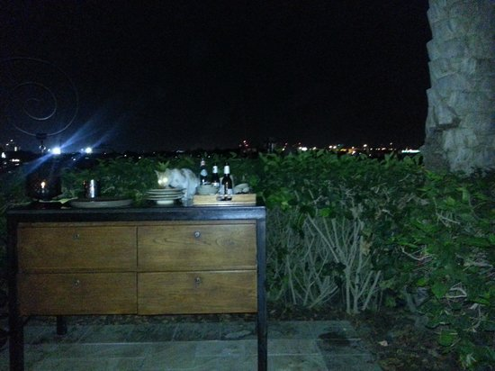 The Thai Kitchen: Cat enjoying fine dining at Thai Kitche with scenic view