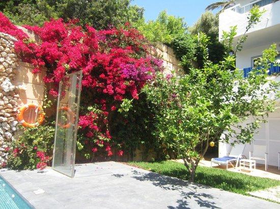 Ferrera Beach Apartments: beautiful plants around the resort