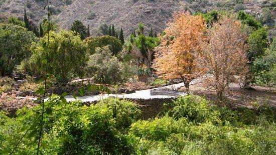 Jardin canario picture of jardin canario las palmas de for Jardin canario
