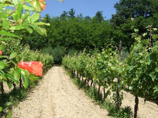 de druivenranken van Le Valli