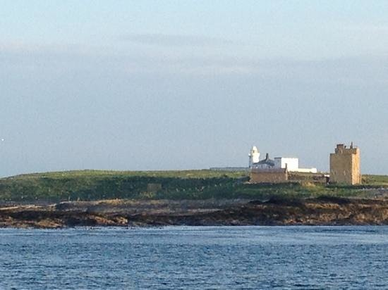 Serenity Farne Island Boat Tours: Beautiful trip!