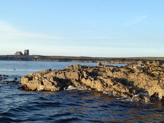 Serenity Farne Island Boat Tours: Relaxing views!