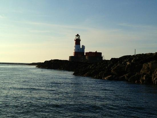 Serenity Farne Island Boat Tours: What a view!