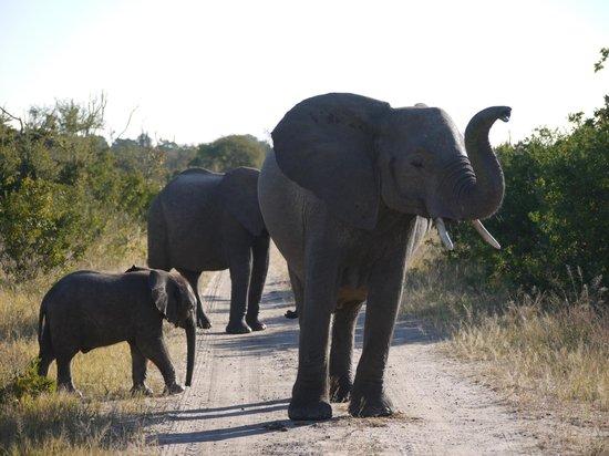 Elephant Safari - Ivory Lodge