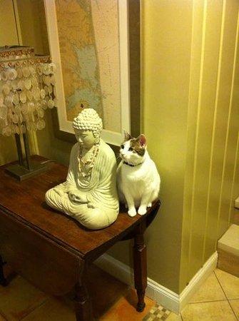 Canalside Inn: sweet housecat