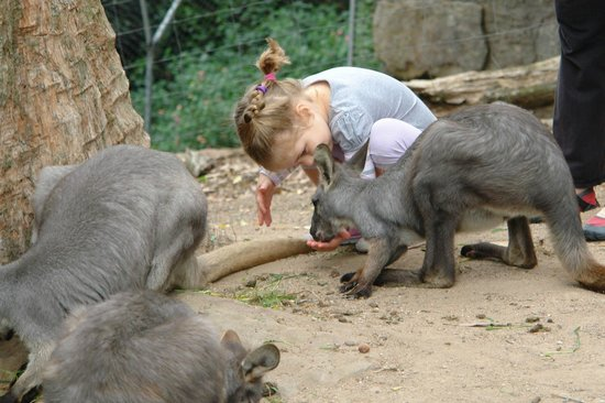 Shoalhaven Zoo: Meet and greet with wallaroos
