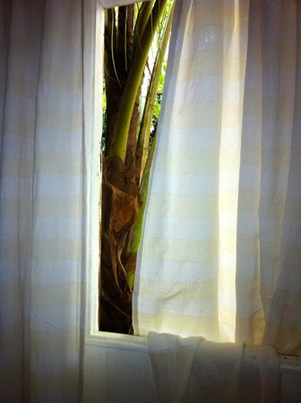 Fond Doux Plantation & Resort: another window in spa area.  I loved having the tropical breezes during my massage