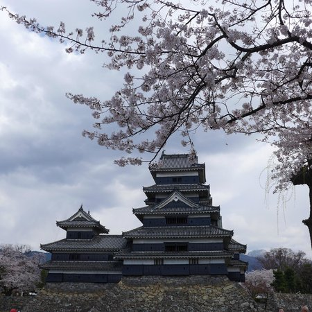 Spring in Matsumoto Castle