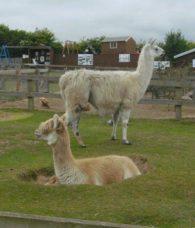 Hillside Animal Sanctuary: A couple of pals!