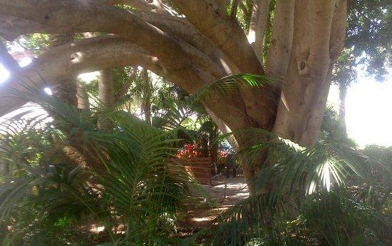 Constitution Park: la arboleda