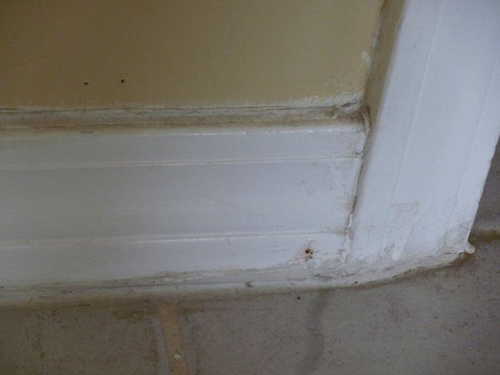 Emerald Isle: filthy baseboards
