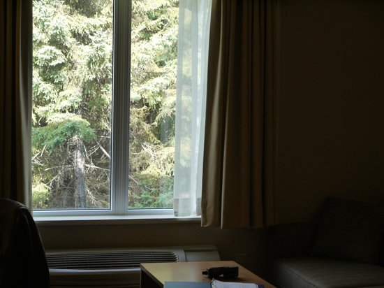Days Inn & Suites - Thunder Bay: You can't see the forest for the trees