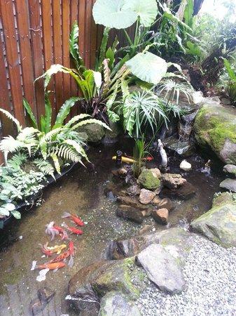 Doris Home: 魚池