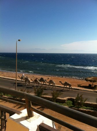 The Bedouin Moon Hotel: Morning view from balcony