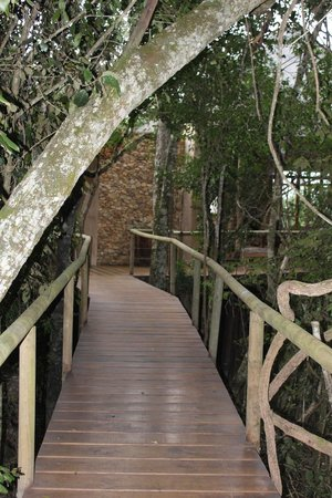 Trogon House and Forest Spa: Walk way to room
