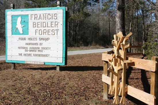 Francis Beidler Forest Audubon Park