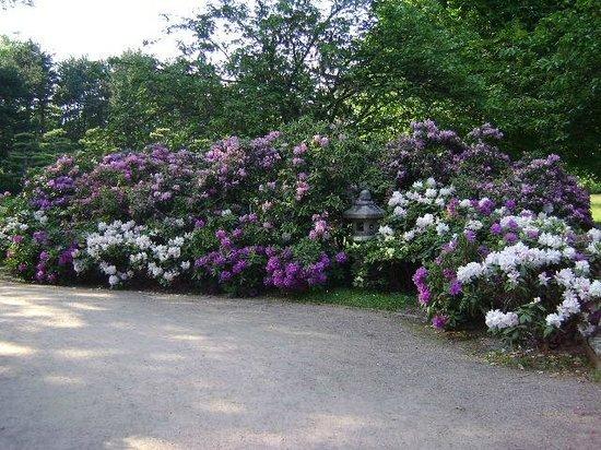 Japanese Garden: Japanses Garden, Düsseldorf, Alemania.