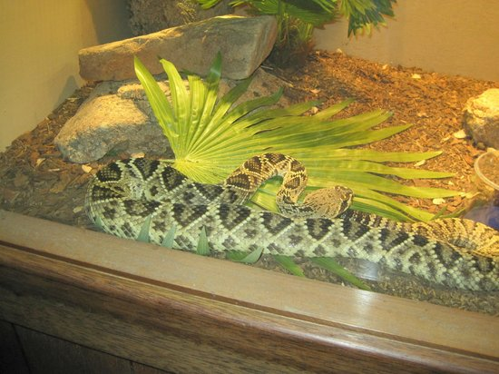 Arizona-Sonora Desert Museum: One of dozens of Live Reptiles and other Animal Species