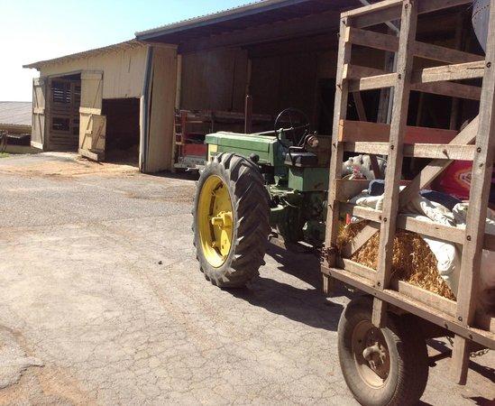 Rocky Acre Farm B&B: hayride