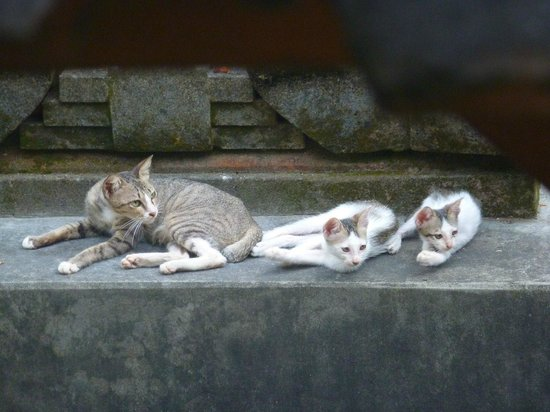 Enny's Homestay: The cat family that lived in the shrine