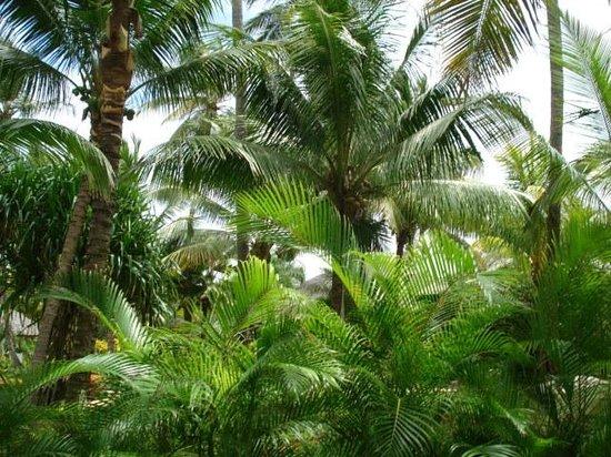 Paradisus Punta Cana Resort: Vegetacion por todas partes