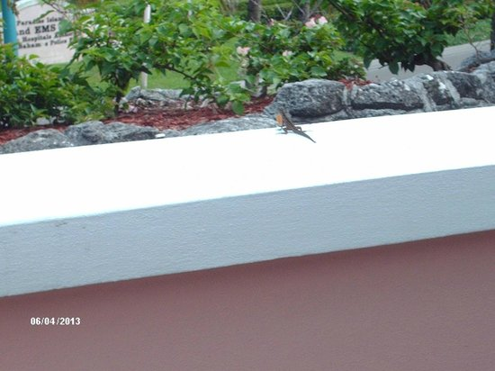Comfort Suites Paradise Island: You'll find small lizards on the wall by the main entrance.
