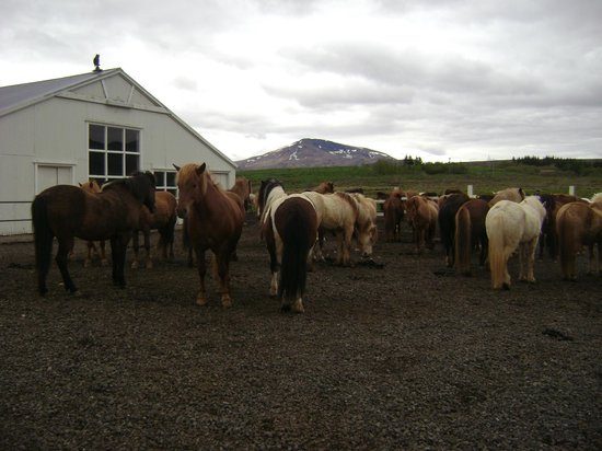 Laxnes Horse Farm: or horses